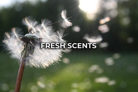 Fresh Scented Melts UK
